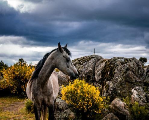 activité yoga avec chevaux