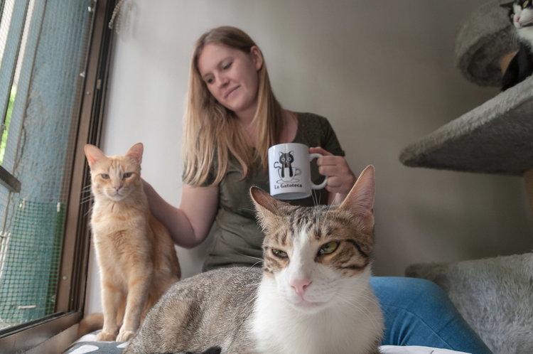 café chats